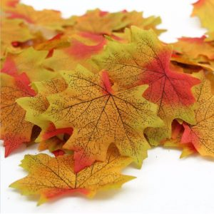 Multicolor Maple Leaves
