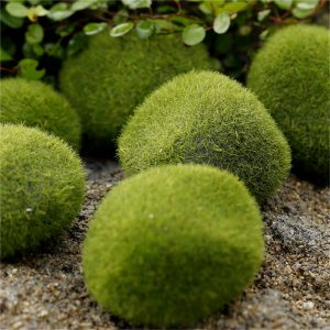 Miniature Outdoor Green Moss