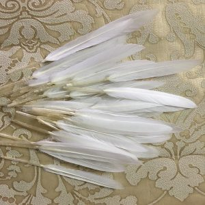 White Tall Feathers