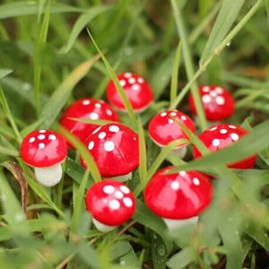 Miniature Mushrooms