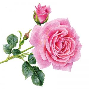 Pink Rose Flower With Leaf Decoupage Napkin