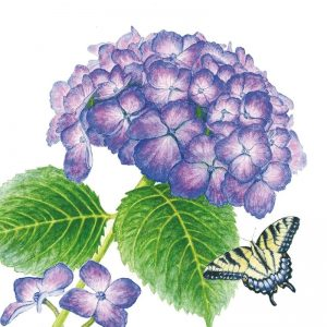 Hydrangea Flower With Butterfly Decoupage Napkin